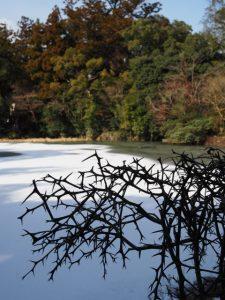 水面が凍りついた外宮勾玉池