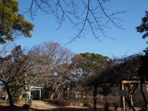離宮院公園の梅園(伊勢市小俣町本町)