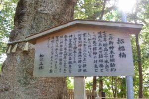 招福楠の説明板(船江上社)