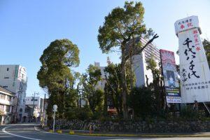 伊勢市駅前から眺めた世木神社の社叢