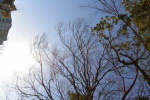 河原淵神社(豊受大神宮 摂社)付近で見上げた空