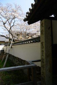 門と土塀とオヤネザクラ(国史跡旧豊宮崎文庫)