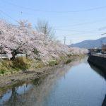 平日なのに桜三昧の一日