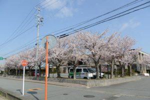 ハートプラみそのの桜(伊勢市御薗町長屋)