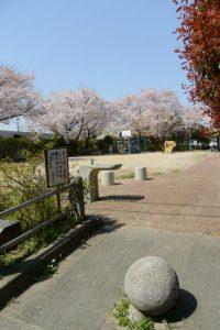一之木公園の桜(伊勢市一之木)