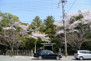 月夜見宮(豊受大神宮 別宮)前の桜