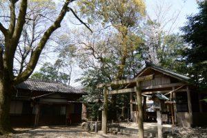 箕曲中松原神社の桜(伊勢市岩渕)