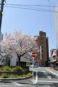 宇治山田駅付近の桜(伊勢市岩渕)