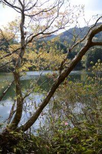 泉貢池の堤の西側から南方向へ(度会郡玉城町積良)