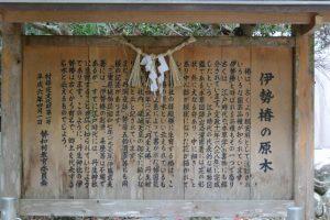 伊勢椿の原木の説明板、丹生神社(多気郡多気町丹生)