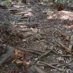 参道に残されたキャタピラの跡、津布良神社(皇大神宮 末社)