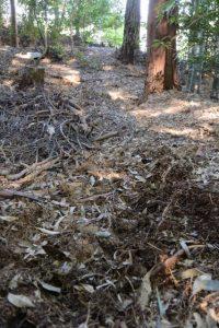 参道から外れた場所に残されたキャタピラの跡、津布良神社(皇大神宮 末社)