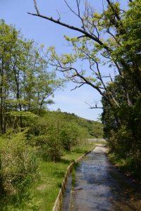 (粟皇子神社へ向かって)湿地帯へ続く林道