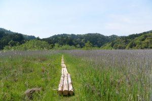 (粟皇子神社へ向かって)湿地帯を抜けて