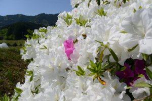 津布良神社周辺の散策(度会郡玉城町積良)