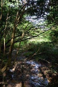 梅香寺歴代住職の墓地の下方の湿地帯