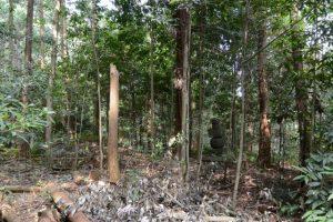 梅香寺歴代住職の墓地付近で見つけた五輪塔