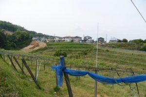 ぶどう畑(伊勢市常磐町)