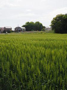 河原神社(豊受大神宮 摂社)の社叢遠望