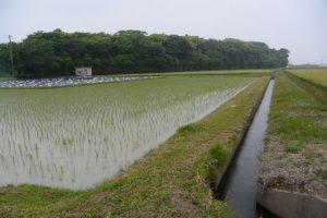 福井水路(神服織機殿神社)から流れ出た水路
