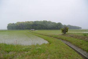 福井水路へ流れ込む水路の上流側から望む神服織機殿神社の社叢