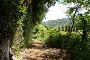 垂直に刈り込まれた植栽、津布良神社(皇大神宮 末社)