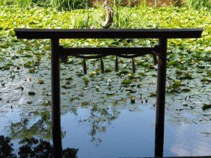 船江上社前の朧ヶ池