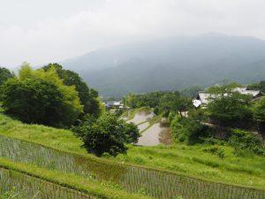 桜で有名な三多気(津市美杉町三多気)