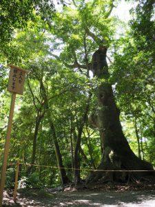 上御井神社の遙拝、大津神社付近(外宮)