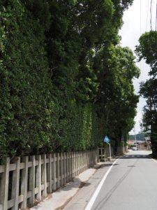 社叢の道路側が剪定されていた御塩殿神社(皇大神宮 所管社)