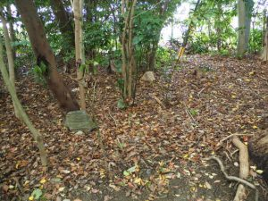 古殿地に置かれていた石の現状復帰は?、河原神社(豊受大神宮 摂社)