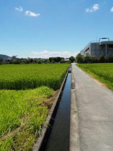 イオン伊勢店付近の水路