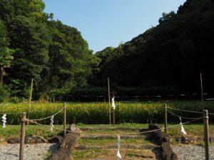 御稲が頭を垂れる御神田(猿田彦神社)