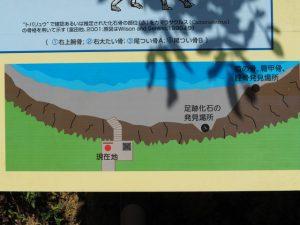 鳥羽竜 足跡化石発見場所の説明図