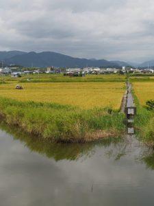 堤防道路から望む水田の中の用水路(伊勢市一色町)