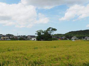 加努弥神社(皇大神宮 末社)の社叢