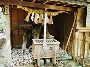 御神木、意非多神社(松阪市西黒部町)