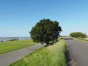 宮川の右岸堤防道路(宮川大橋の下流側)