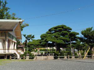 社務所と弥栄の松(日保見山八幡宮)
