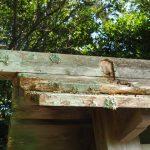 かなり傷んでいる玉垣の猿頭門、加努弥神社(皇大神宮 末社)