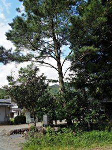 大内山の一里塚(度会郡大紀町大内山)