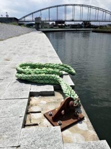 勢田川右岸のアナコンダ(2018年08月31日時点)