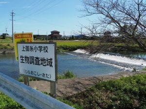 祓川に架かる橋の上流側にある堰、上御糸小学校生物調査地域(明和町佐田)