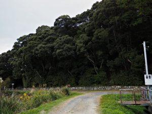 朝熊神社(皇大神宮 摂社)の社叢