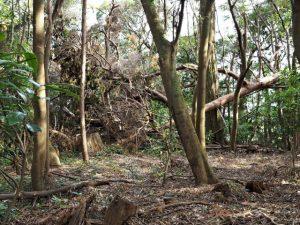 荒れた境内地、蚊野神社(皇大神宮 摂社)