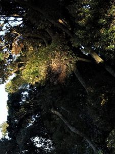 二人目の影、朝熊神社(皇大神宮 摂社)付近にて