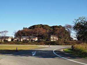 宇治山田神社(皇大神宮 摂社)の社叢遠望