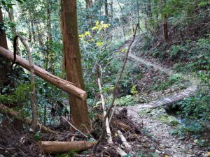 鴨神社付近から的山公園への坂道へと続く水平道