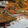 秋色に染まる丹生山神宮寺(多気郡多気町丹生)