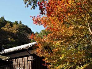 秋色に染まる社務所付近、丹生神社(多気郡多気町丹生)